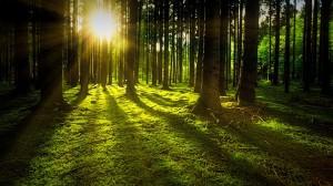 Miškai