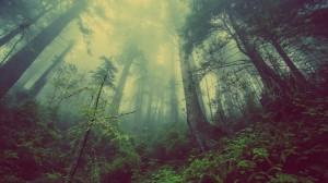 Miškai Lietuvoje
